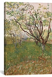 The Flowering Orchard 1888 by Vincent van Gogh Canvas Print #1017