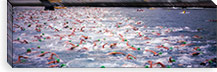 Triathlon athletes swimming in water in a race, Ironman, Kailua Kona, Hawaii, USA #PIM5875