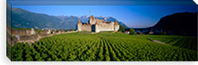 Vineyard in front of a castle, Aigle Castle, Musee de la Vigne et du Vin, Aigle, Vaud, Switzerland #PIM3195