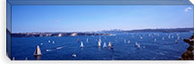 Yachts in the bay, Sydney Harbor, Sydney, New South Wales, Australia #PIM3747