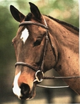 Bridleway Fancy Stitched Raised Bridle