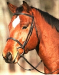 Bridleway Plain Raised Padded Bridle