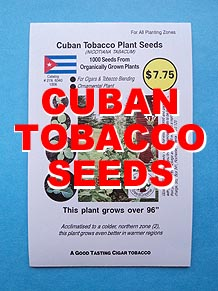 Cuban Cigar Tobacco Plant Seeds