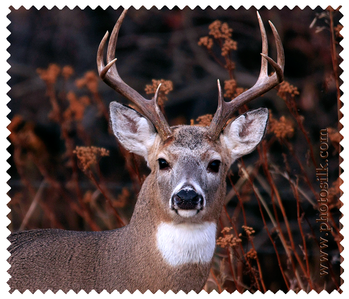 White Tail Buck Photosilk