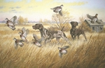 German Shorthaired Pointer : Glory Days - artist proof