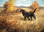 Gordon Setter: The Scotsman - print