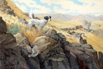 """<font size=""""2"""" font color=""""red"""">NEW</font> Setter: Into Thin Air � giclee"""