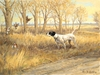 """<font size=""""2""""><font color=""""red"""">SOLD</font></font> English Pointer and quail: Kansas Gold - original oil"""