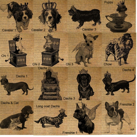 Cavalier, Chihuahua, Dachshund and French Bulldog Feeders & Toy Boxes