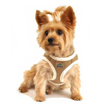 Harnesses & Leads