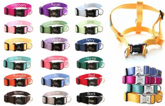 Laser Engraved Web Collars or Step-in Harnesses