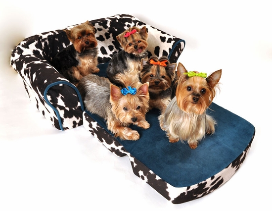 Pet Flys Cow Print Sleeper Sofa with Turquoise Trim and Interior