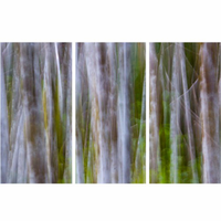 Abstract Birch Forest Wall Art