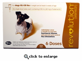 Revolution for dogs 10.1 to 20 lbs (6 Month)