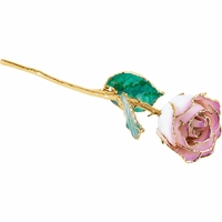 Cream Picasso 24k Gold Dipped Rose