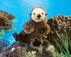 Folkmanis Puppet <br>Baby Sea Otter