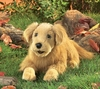 Folkmanis Puppet <br>Golden Retriever Long