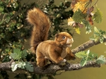 Folkmanis Puppet <br>Mini Red Squirrel