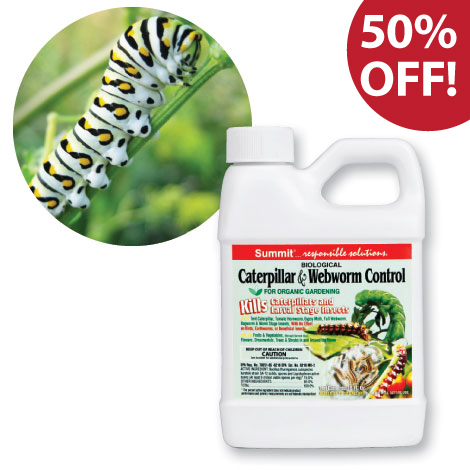 Caterpillar and Webworm Control