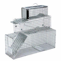Collapsible Raccoon Trap