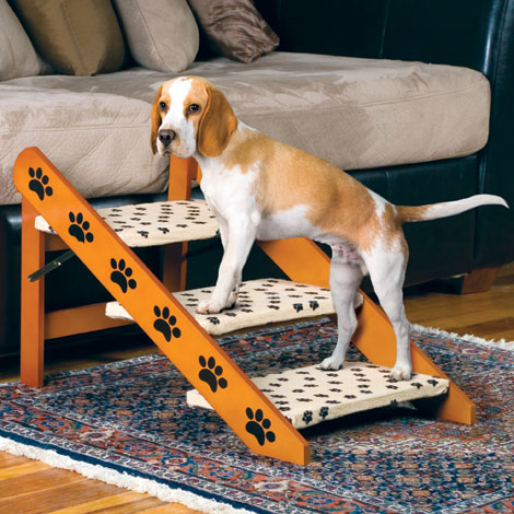 Convertible Pet Steps / Ramp