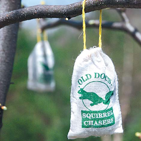 Squirrel Chaser - Set of 3