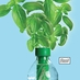 Water Bottle Planter
