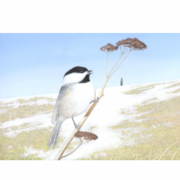 Black-capped Chickadee, 6 Notecards and Envelopes