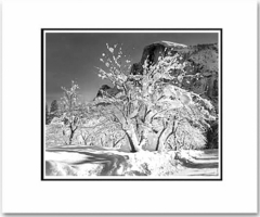 HALF DOME, APPLE ORCHARD, WINTER, YOSEMITE