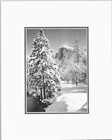 HALF DOME, TREE, WINTER
