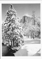 HALF DOME, TREE, WINTER, FROM STONEMAN BRIDGE, YOSEMITE NATIONAL PARK, CA, 1940
