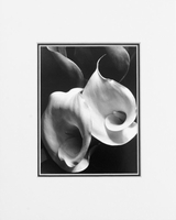 TWO CALLAS - SMALL MATTED REPRODUCTION