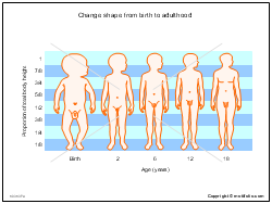 Change shape from birth to adulthood