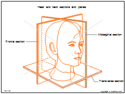 Head and neck sections and planes