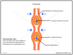 peristalsis ppt powerpoint drawing diagrams, templates ... diagram of peristalsis
