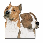 American Staffordshire Terrier Magnet
