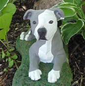 Hand Painted Pit Bull Statue (Natural Ears)
