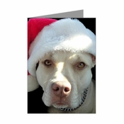 """Merry Pitmas"" Note Cards (Pack of 10)"