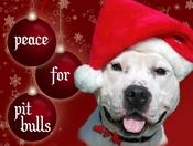 Peace For Pit Bulls Christmas Cards (Pack of 10)