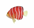 Silicone Peppermint Angelfish Decor - Red
