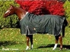 Baker Turnout Horse Blanket - Solid Green