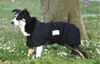 Dog Jackets & Clothing