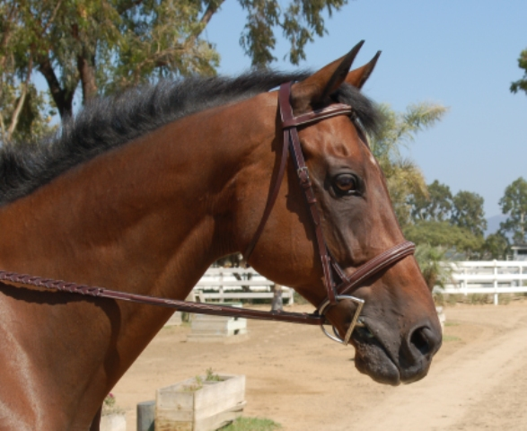 Hadfield Raised Fancy Stitched Padded Hunter Bridle
