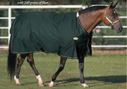 Sussex Turnout Blanket by Big D