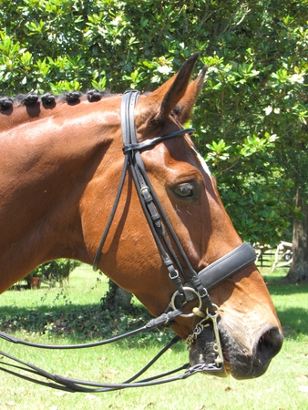 Vespucci Rolled Leather Snaffle Dressage Bridle