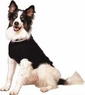 Fashion Pet Lookin Good Classic Cable Sweater for Dogs, X-Small, Black