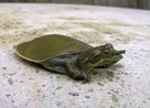Other Turtle