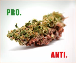 a discussion of marijuana and a comparison of both sides of the issue of legalizing marijuana