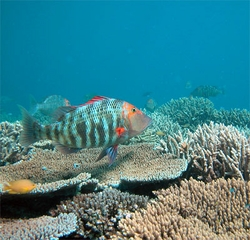 Climate Change and Coral Reefs: <br> Comprehensive Classroom Resource