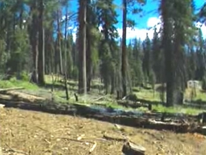 The Teakettle Experiment: Fire and Forest Health